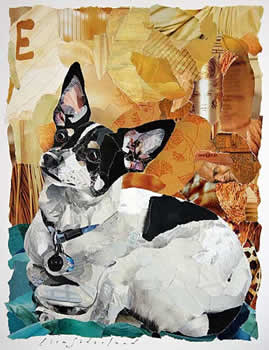 collage of a dog