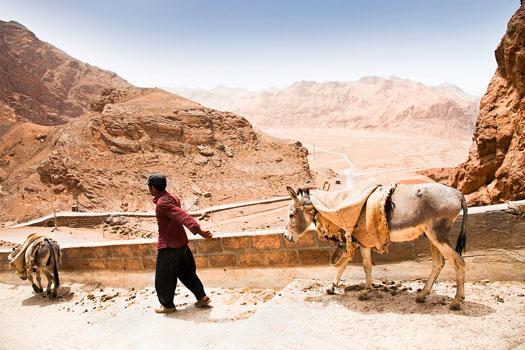 Shepherd with a donkey. Iran