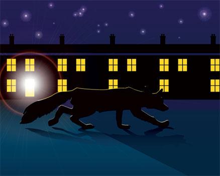 An urban fox at night