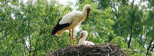 Permaculture : The True Story of Fagagna 's Storks