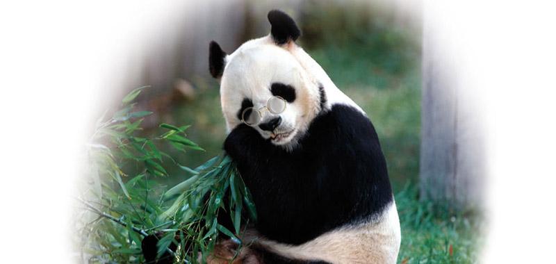 pandaB01