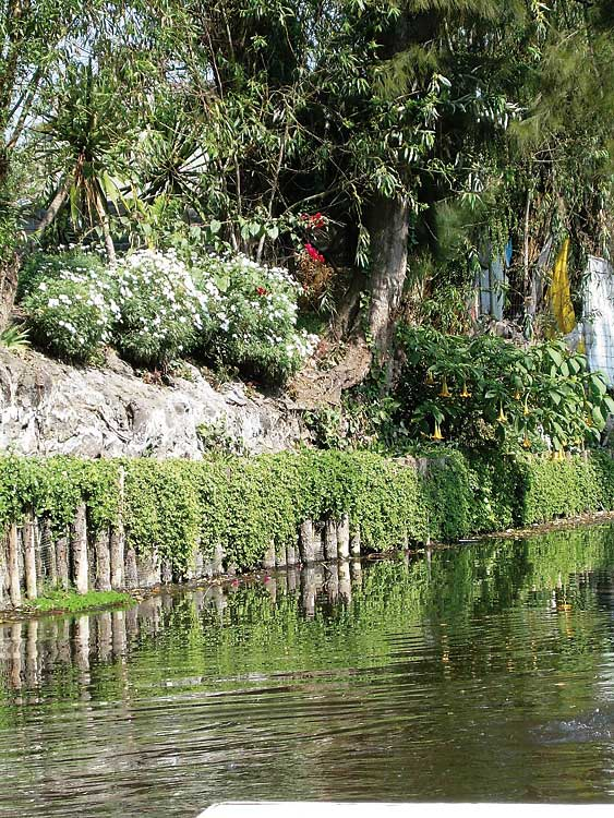 Xochimilco floating garden