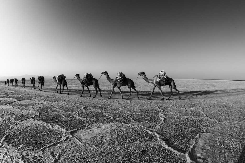 Camel-caravans-carrying--salt-to-the-highlands
