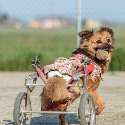 like-a-dog-with-two-wheels-1