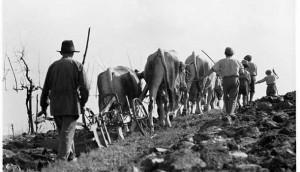 Before Halloween the filò - men working the land