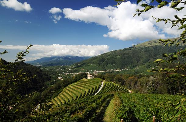 Vineyard Rive di Colbertaldo