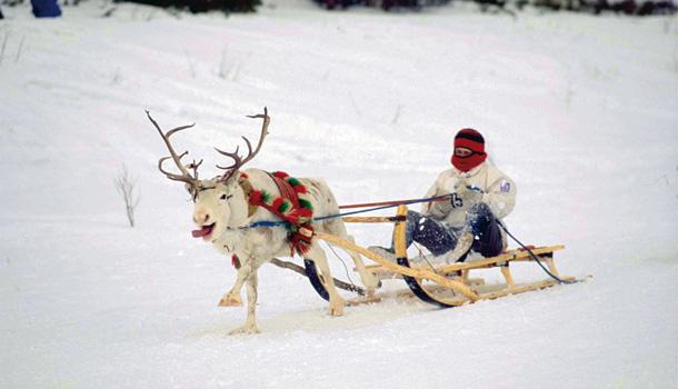 Sami reindeer-sledging